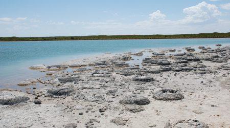 Stromatolites_at_Lake_Thetis_-_Western_Australia-scaled.jpg
